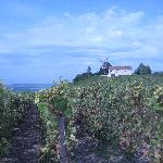 Outside of Ludes (view of the Mumm's windmill)