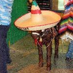Bild från Los Bandidos
