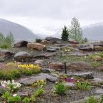 Tromso Botaniske Hage