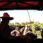 Napa Carriage Tour