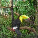 A Toucan will greet you on the entrance