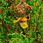 Weaver birds outside the room - best part of the stay.