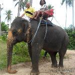 Elephant trekking...NO dejen de montarlos a ellos!!!
