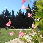 September garden