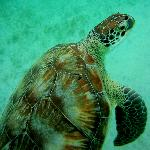 Turtle Beach, Culebrita Island..Water taxi services at VP's dock facilities available..
