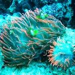 Snorkeling at Menjangan www.dajuma.com