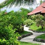 Tropical garden www.dajuma.com