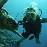 Qualifying as an Open Water Diver