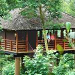 Shola Tree House