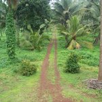 Soans Farm
