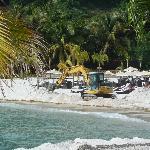 Guyanan sand beach transplant!