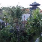 ベランダから見た風景、ジャングルって感じです。