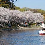 Akashikoen im April