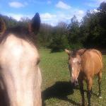 WhistleWood resident horses