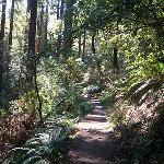 hillside trail spur