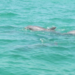 A huge dolphin family very close to the boat!