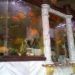 Aquariums reception