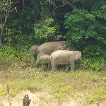 Jungle elephants seen during our trip