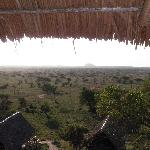View of african savannah from dining room