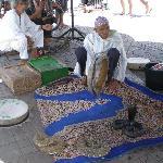 ..snakes in Marrakesh.