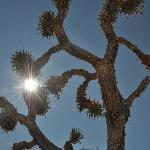 Joshua Tree (again!)