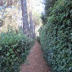 Walking path at hotel