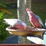 Riviera B&B, Gilston. Breakfast guests