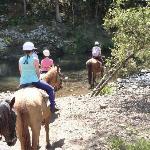 """Numinbah Stables, """"Creek Crossing"""""""