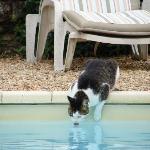 Lucky Boy met zijn zwembad