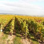 Vineyards in the Autumn