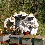 actividades de apicultura
