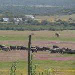addo elephant reserve