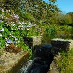 Tranquil garden at the Old Rectory