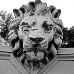 Another U City Lion