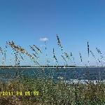 Sea oats waft in the breeze