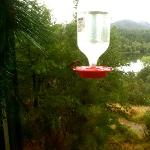 humming bird breakfast