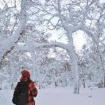 樹氷を見に。。