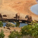 Watering hole at Voi lodge