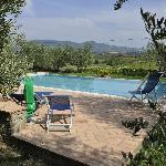 La piscine au milieu des oliviers
