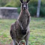 You said you want to see kangaroos?