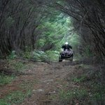 A Bush track is included in our ride