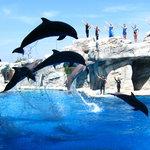 il meraviglioso spettacolo dei delfini
