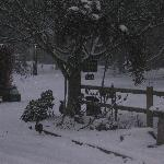 Even the pheasants liked Christmas Cottage in the snow