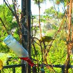 Bird watching in the garden at breakfast