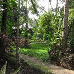 The beautfilly maintained grounds at Lembeh Resort