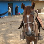 My horse, Irene