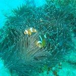 Buceo Phuket2