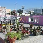 rooftop cactus garden