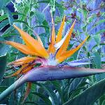 Bird of Paradise in Garden
