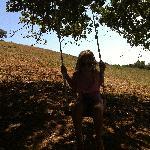 Una delle altalene sotto gli alberi